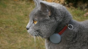 connected cat